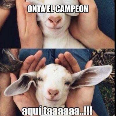 memes de Chivas