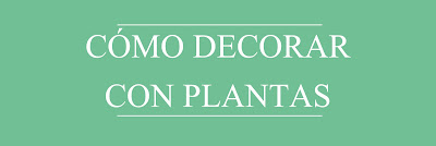 decoración y plantas
