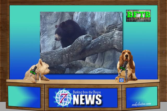 BFTB NETWoof News reports on wild animals