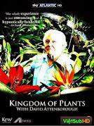 Vương Quốc Thực Vật Phần 1: Cuộc Sống Trong Khu Ẩm Ướt