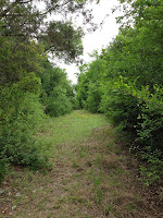 image of trees and grass without a clearly defined path