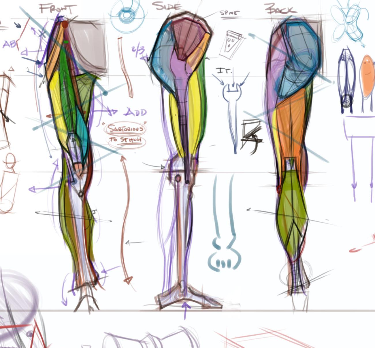 Figuredrawingfo News Leg Anatomy