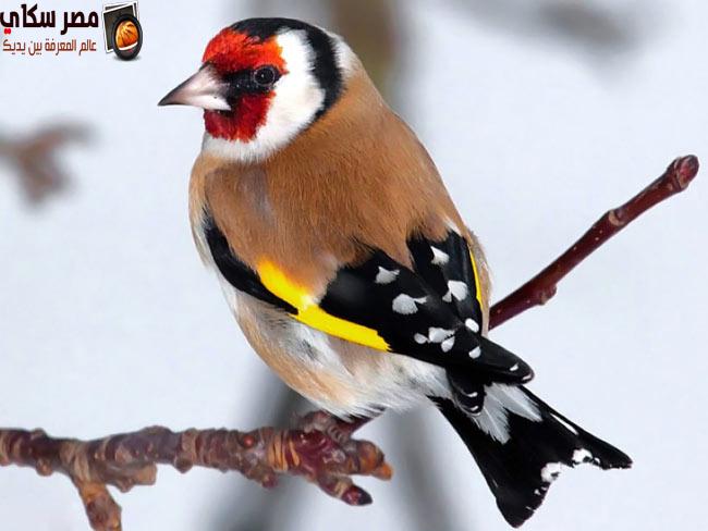 صفات وخصائص الطيور العلمية بالصورCharacteristics of birds