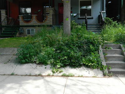 Palmerston Front Garden Clean up before by Paul Jung Gardening Services Toronto