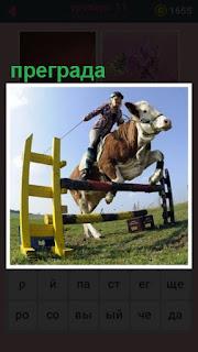 всадник на корове преодолевает очередную преграду