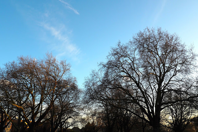 blue sky and trees in Hackney