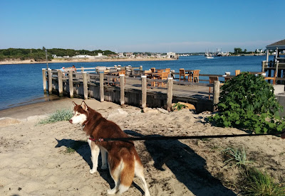 Montauk, Long Island, New York has several dog friendly places