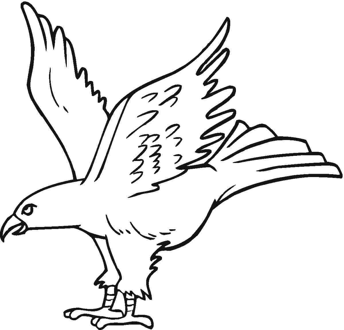 Burung Elang Gambar Burung Elang Putih Gambar Burung Elang Terbang