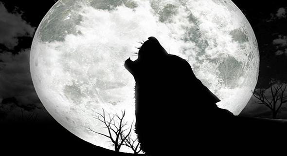 Berita Kali ini : Serigala Pun Mengakui Kenabian Muhammad Saw, Bagikan !