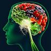 Makanan untuk Meningkatkan Daya Ingat Otak Anda