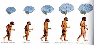 psicologia evolutiva y atractivo sexual