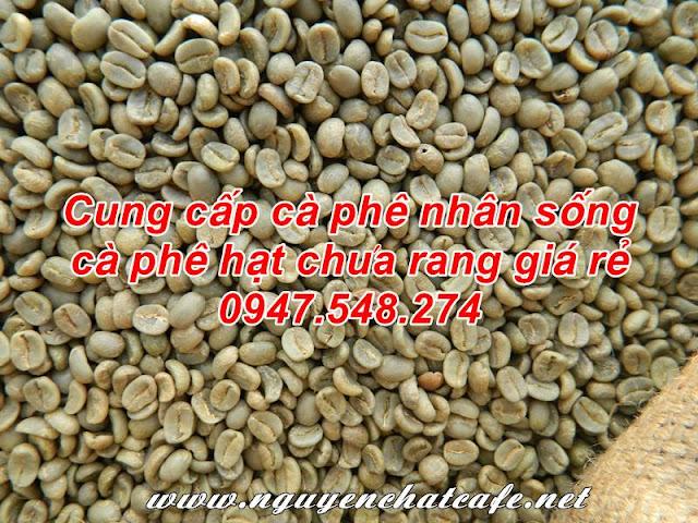 Giá cà phê hạt chưa rang, giá cà phê nhân sống
