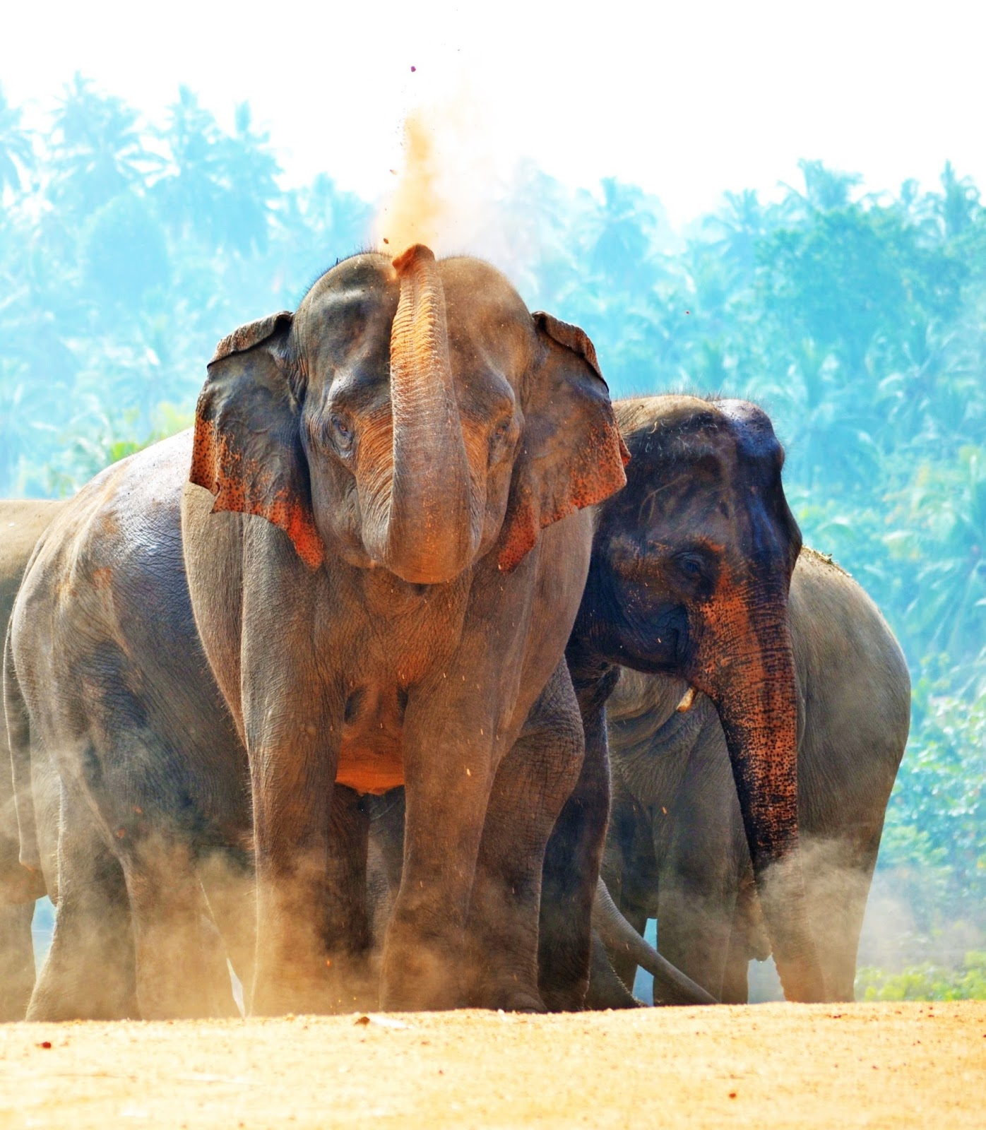 Elephant sand bath.