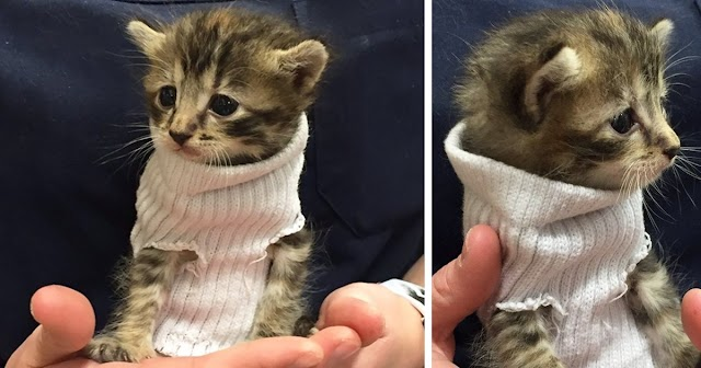 Kitten Rescued From Hurricane Matthew Gets Tiny Sock Sweater And Finds New Home
