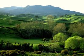 The lush greenery of the Waikato, New Zealand