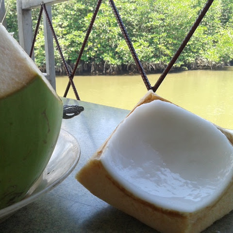 Fresh Coconut Drink While See Mangrove