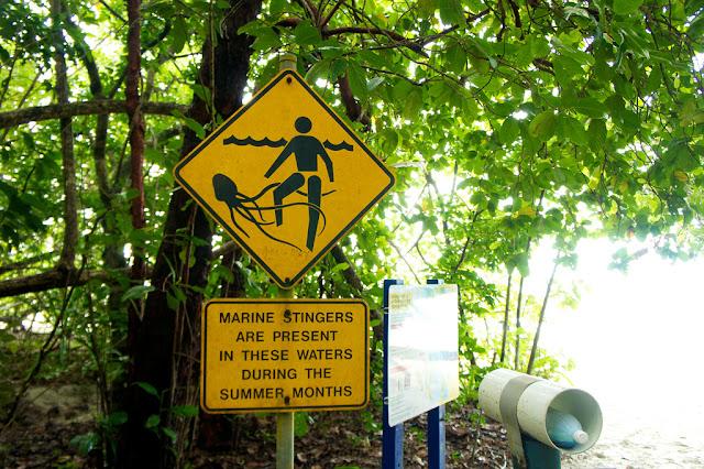 jellyfish sign australia
