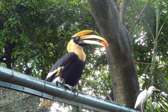 Hornbill w Bird Park