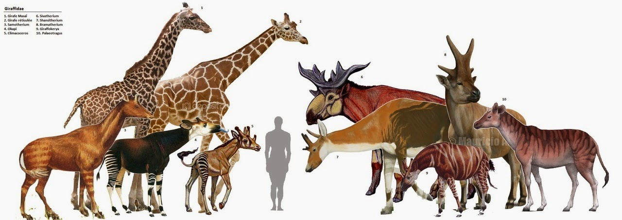 """Giant Science Lady : 5 Mammals that Look """"Prehistoric"""""""