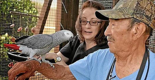 Papagaio fujão retorna depois de 4 anos! E com uma surpresa!