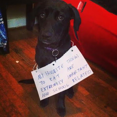 Funny Dog Shaming : Sorry i ate your homework