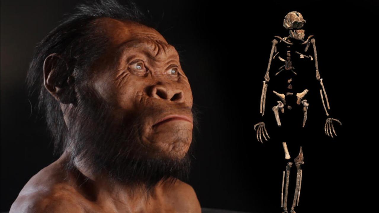 Homo Naledi, otra especie humana que vivió junto a los Sapiens, es más joven de lo que se creía