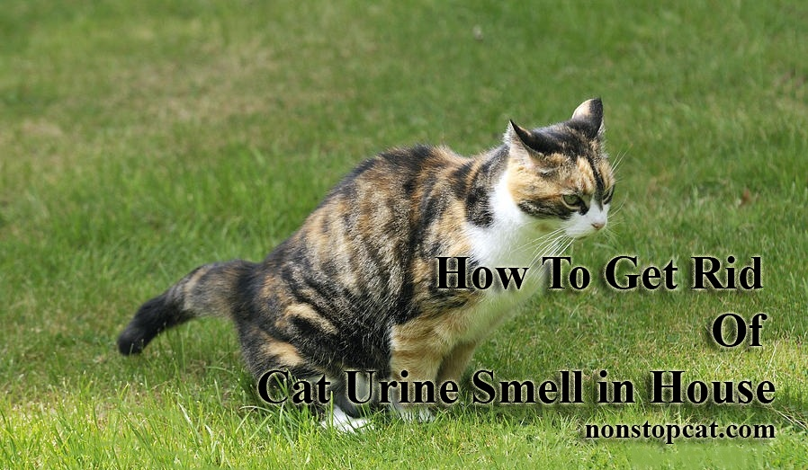 How To Get Rid Of Cat Urine Smell in House