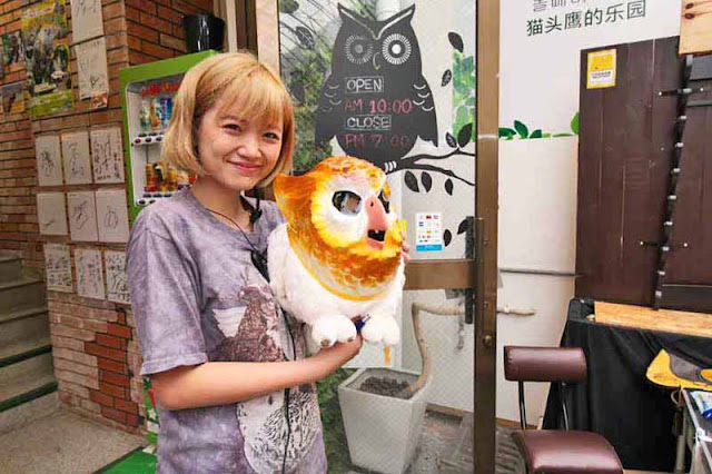 girl, bird, owl, animals, staff, employee, Okinawa, Naha