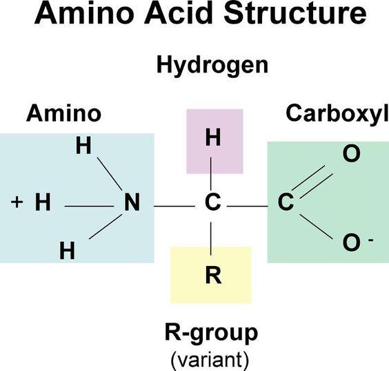 Amino acids structure
