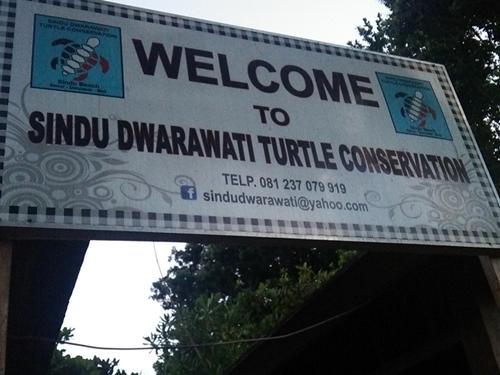 サヌールの海亀孵化施設☆turtle conservation