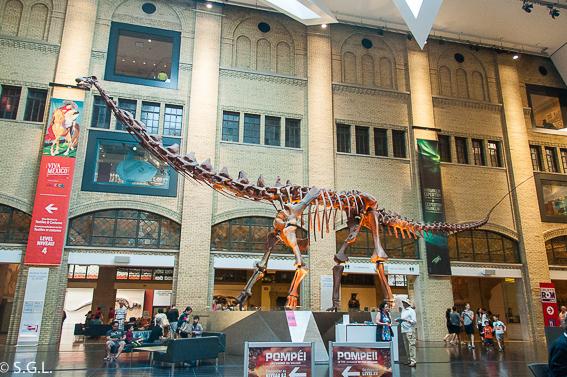Donosaurio entrada museo ROM Royal Ontario Museum Toronto