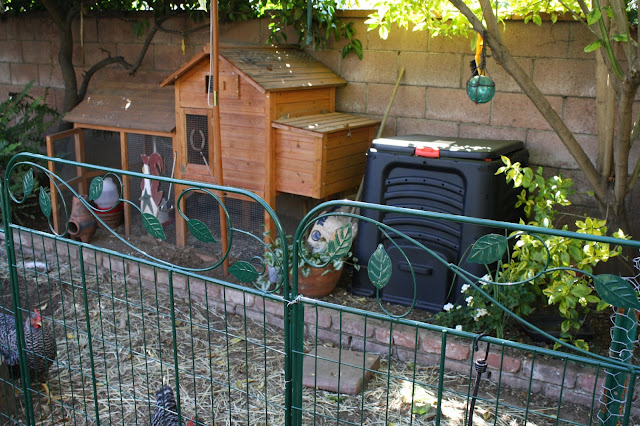 Small chicken coop, urban chickens