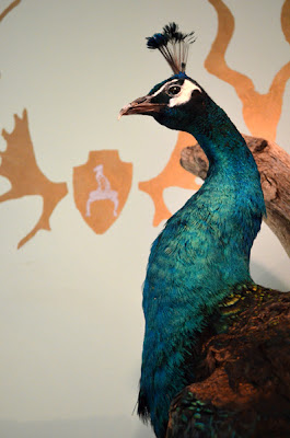 Peacock Trophy and Stenciled Wallpaper, Cathedral Antiques Show, Summer Loftin