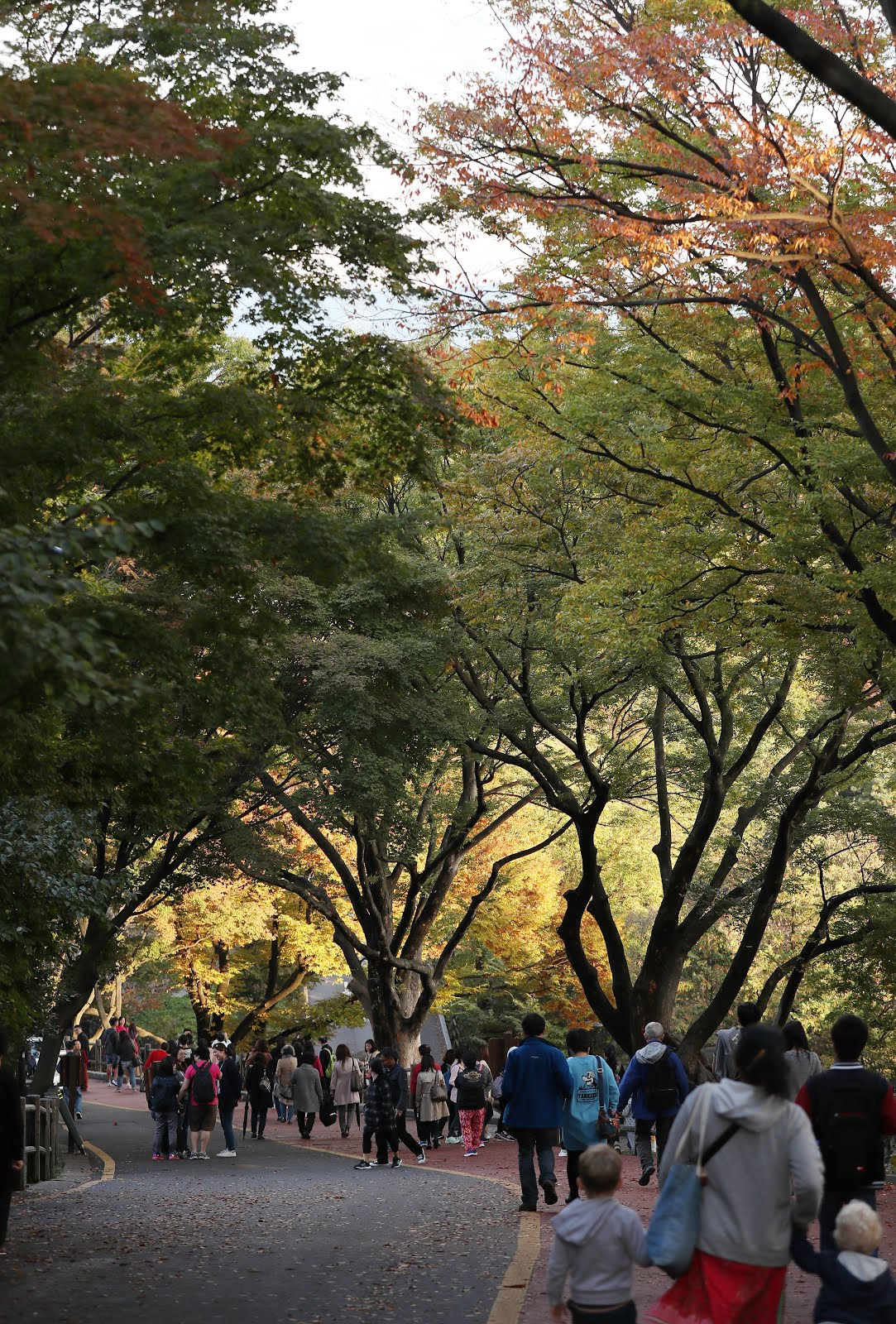 Early autumn hues started to paint the lush vegetation of trees in Namsan Park.
