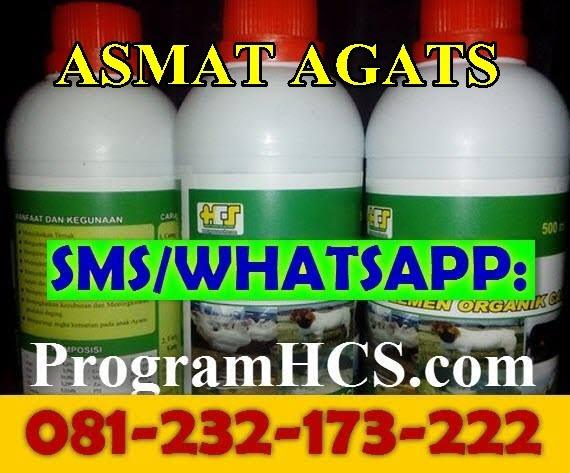 Jual SOC HCS Asmat Agats
