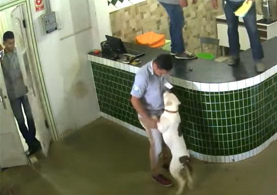 Pitbull invade loja em Rondônia e causa pânico - IMG 3