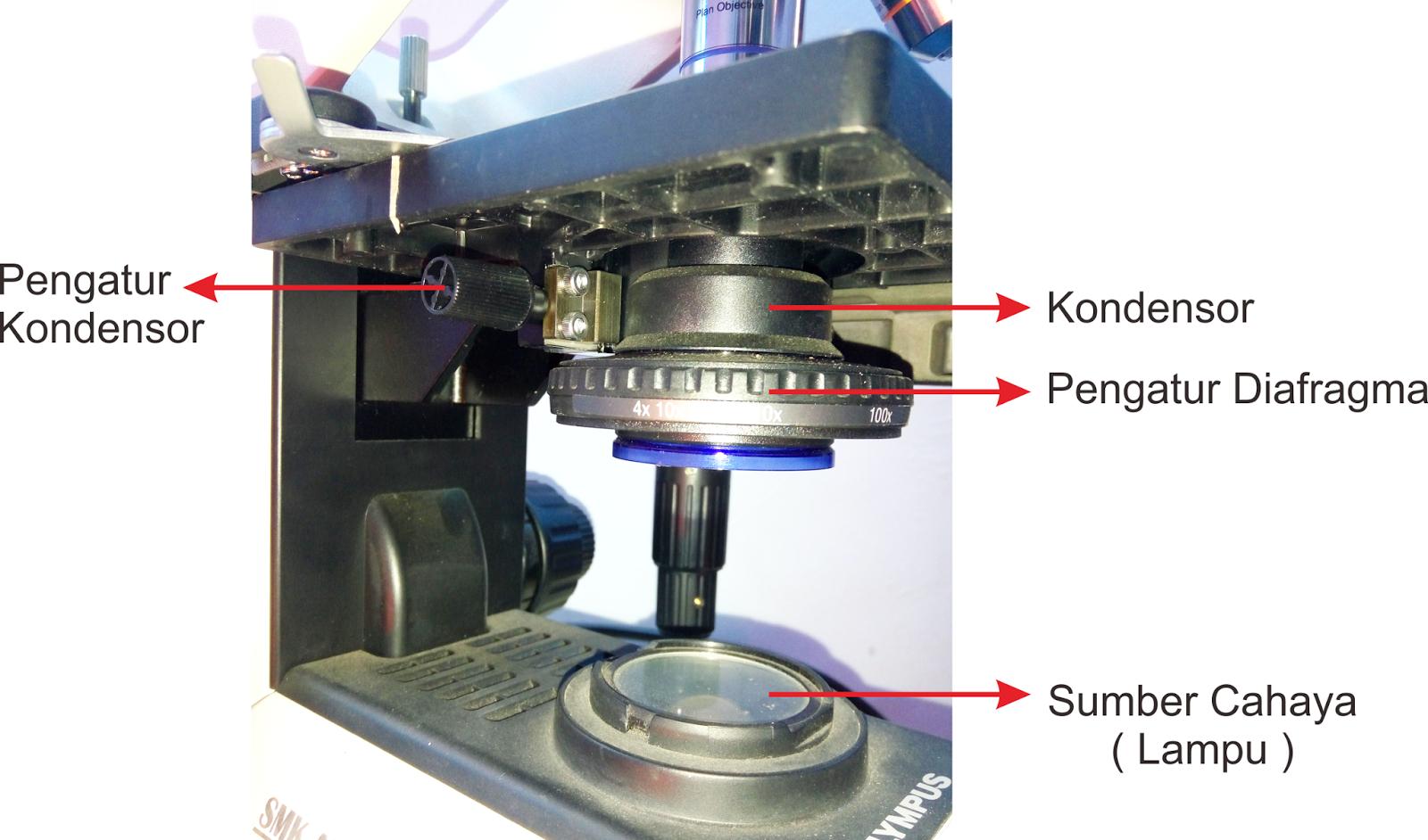 Bagian bagian dari mikroskop cahaya dan fungsinya ppt mikroskop