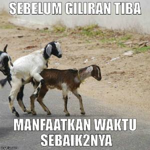 Koleksi Gambar Meme Foto Lucu dan Unik Idul Adha