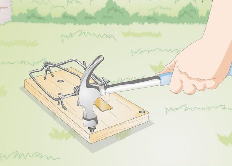 Fare kapanını yere oynamayacak şekilde sabitlemelisiniz.