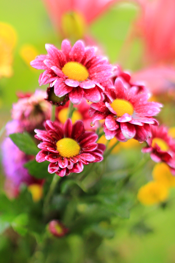 Mademoiselle Mermaid: Friday Flower Pick : Unbirthday Flowers