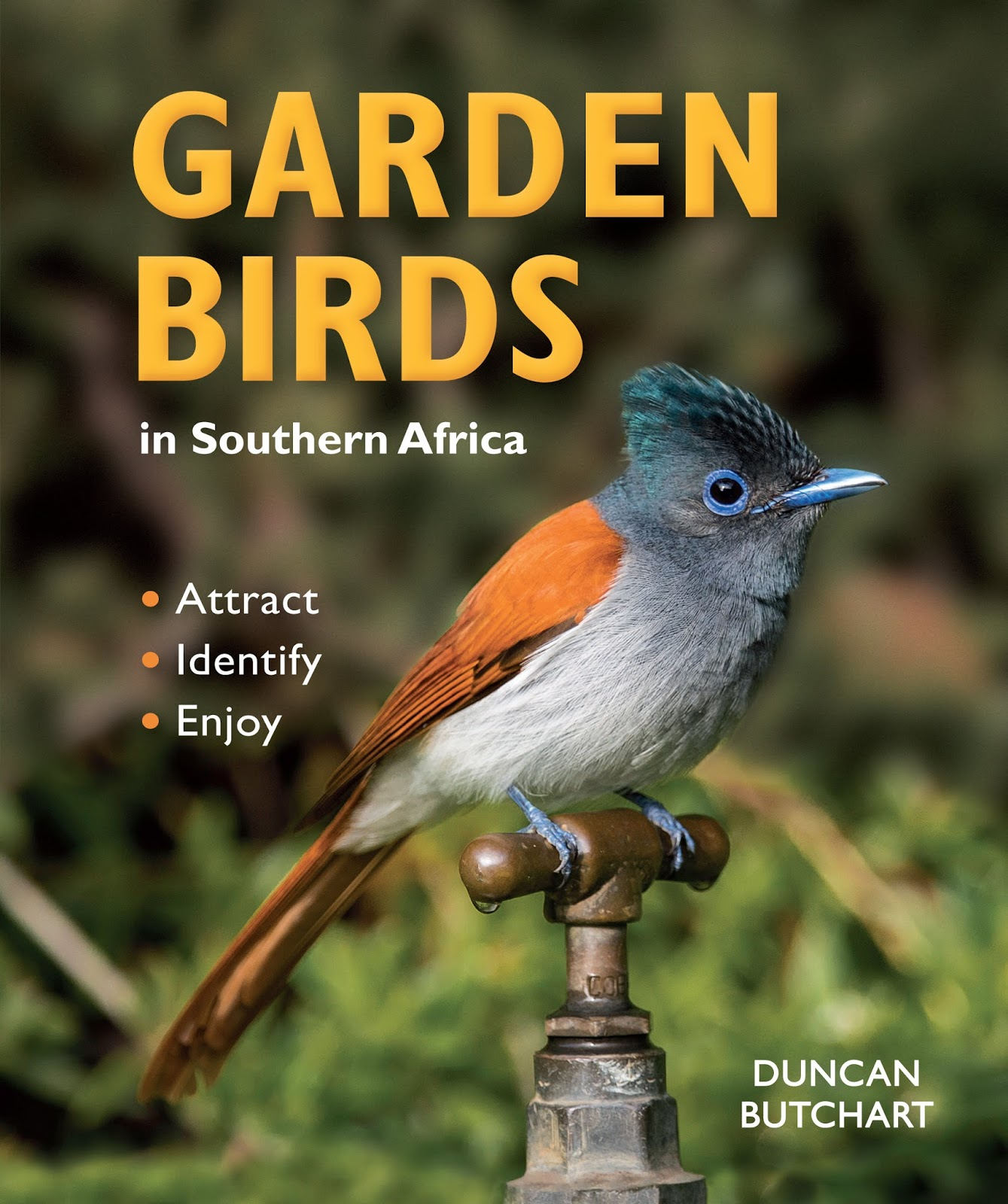 Southern Africa\'s Ramsar Sites: GARDEN BIRDS in Southern Africa
