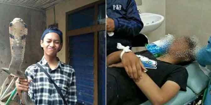 Miris ! Remaja Ini Tewas Gara - Gara Digigit Ular Kobra Peliharaannya