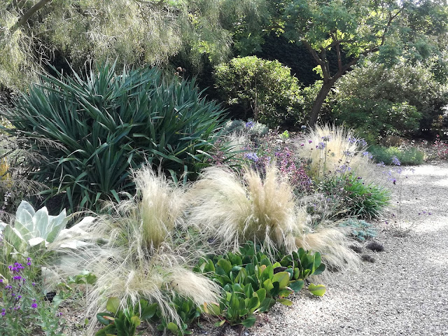 suchy ogród żwirowy