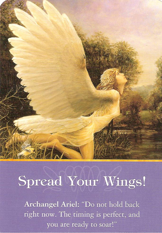 Indigo Readings Blog: Todays Reading - Spread Your Wings