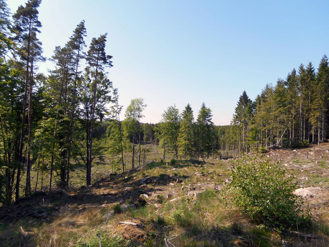 Tagliata forestale