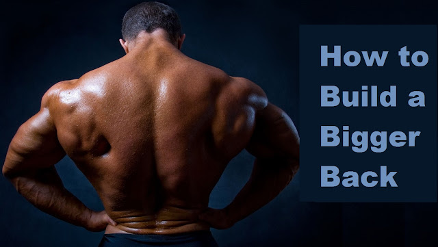 exercises to build bigger back