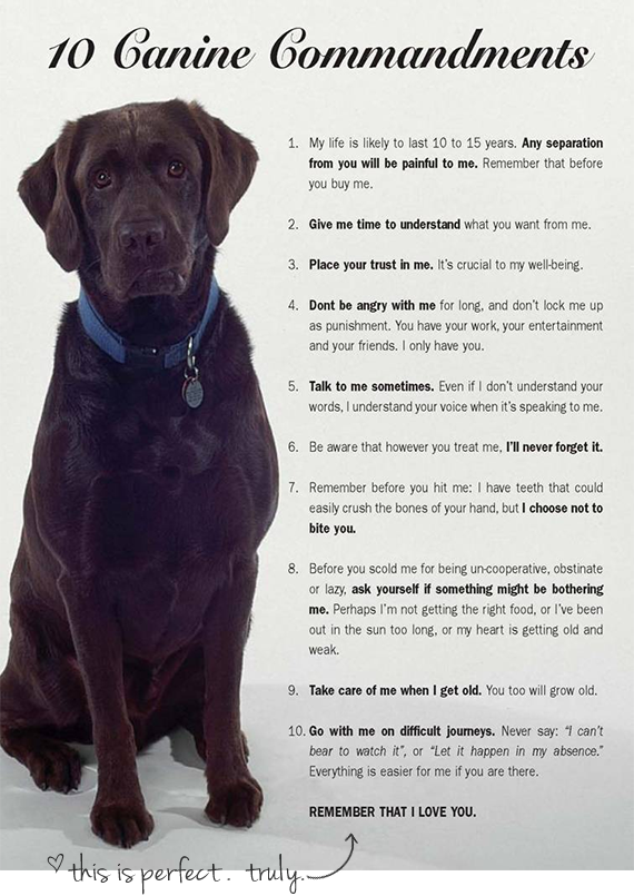 ten canine commandments
