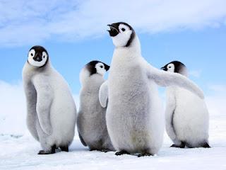 Belajar Hal Tentang Kehidupan dari Penguin