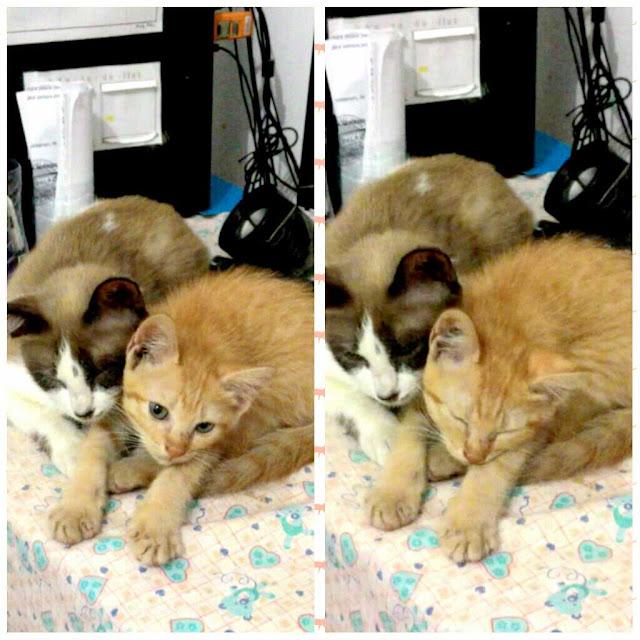 Puspus dan Kuning bukan Ibu-Anak, tetapi mereka saling sayang.
