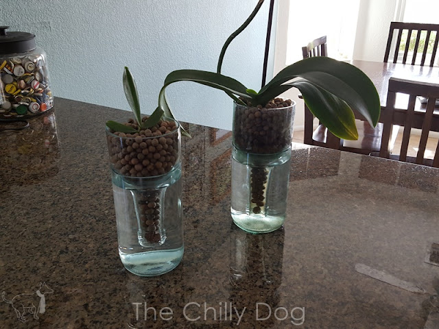 DIY Tutorial: Cut recycled glass wine bottles to create an elegant, self-watering vase for orchids and more.